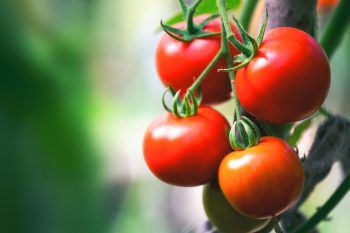 How to Grow Tomatoes in Containers | Grow Tomatoes in Containers | How to Grow Tomatoes | Tomatoes | Growing Tomatoes: Tips and Tricks | Garden Hacks | Garden Tips and Tricks