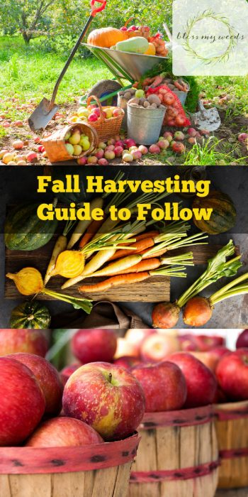 Fall Harvesting | Fall Harvesting Tips and Tricks | Fall Garden | Fall Gardening | Fall Gardening Tips and Tricks | Fall Harvesting Hacks