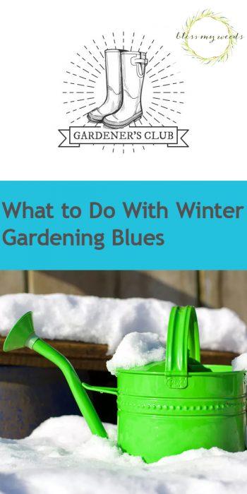 Winter Gardening Blues | Winter Garden Blues | Combat Winter Gardening Blues | Winter Garden | Winter Gardening Hacks | Garden | Winter