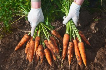 Growing Carrots | Plant Guide | Gardening Guide | Garden | Gardening | Growing Carrots Tips and Tricks | Hacks for Growing Carrots
