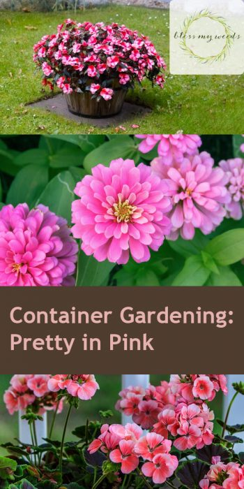 Container Gardening | Pretty in Pink Flower Gardens | Pretty in Pink Flowers | Container Gardening Tips and Tricks | Container Gardens | Container Gardens: Flowers