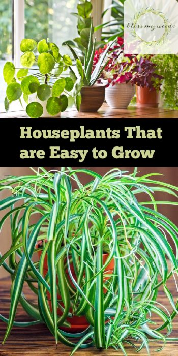 Houseplants that are Easy to Grow | Easy to Grow Plants | Houseplants | How to Grow Houseplants | Tips and Tricks for Housplants | Plant Care Tips and Tricks