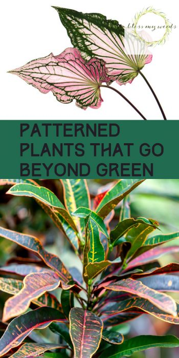 Patterned Plants | Patterned Plants for the Garden | Garden | Plants | Colored Plants | Interesting Plants | Plant Ideas