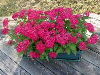 Container Gardening | Rectangular Containers | Container Gardening Tips | Rectangular Container Gardening | Rectangular Container Gardens | Rectangular Container Gardening Tips