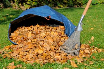 Fall Cleanup | Fall Leaves | Fall Leaf Cleanup | Fall Leaves Cleanup Tips and Tricks | Fall | Autumn | Fall Cleanup Hacks