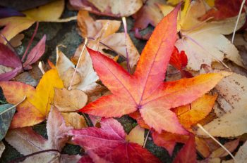 Fall Cleanup   Fall Leaves   Fall Leaf Cleanup   Fall Leaves Cleanup Tips and Tricks   Fall   Autumn   Fall Cleanup Hacks