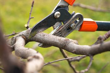 Tree Pruning Ideas | How to Prune Trees | Winter Tree Pruning | Pruning | Winter Pruning | Tips and Tricks for Winter Tree Pruning | Tips and Tricks for Pruning | Pruning Tips and Tricks