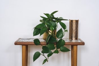 Houseplants that are Easy to Grow   Easy to Grow Plants   Houseplants   How to Grow Houseplants   Tips and Tricks for Housplants   Plant Care Tips and Tricks