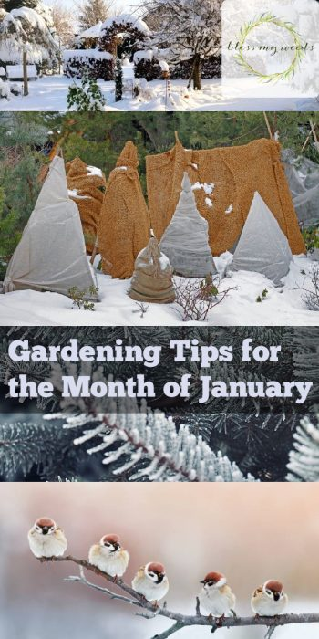 Winter Gardening Tips | Gardening Tips | January Gardening | Garden in the Winter | Winter Gardening Tips and Tricks | Gardening Ideas