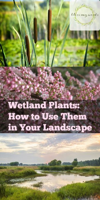 Wetland Plants | How to Care for Wetland Plants | Tips and Tricks for Wetland Plants | How to Incorporate Wetland Plants into Your Landscape | Wetland Plants Landscape
