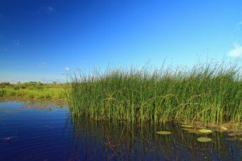 Wetland Plants | How to Care for Wetland Plants | Tips and Tricks for Wetland Plants | How to Incorporate Wetland Plants into Your Landscape | Wetland Plants Landscape