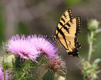 Wildflowers | Wildflowers for your Yard | Wildflowers for Butterflies | Wildflowers to Attract Butterflies | Wildflowers Tips and Tricks | How to Care for Wildflowers