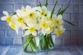 Daffodils | Daffodil Flowers | Daffodil Flower Garden | Flower Garden | Daffodil Flowers | Flowers for the Garden