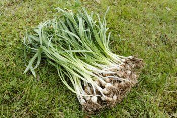 Budget-Friendly Gardening | Budget-Friendly Ideas | Budgeting for the Garden | Gardening on a Budget | Garden Budget Ideas | Gardens | Gardening Tips and Tricks