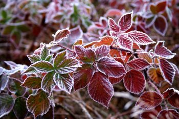 Predict Frost | How to Predict Frost | Learn How to Predict Frost | Prevent Frost | Keep Your Plants Out of the Frost | How to Prevent Frost