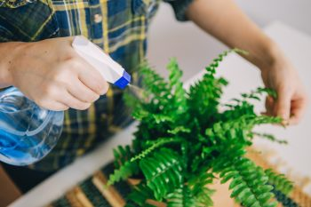 Plant Parenting | Plant Care Tips and Tricks | Plant Parenting Tips and Tricks | Plant Care Tips | Plant Care | Plants