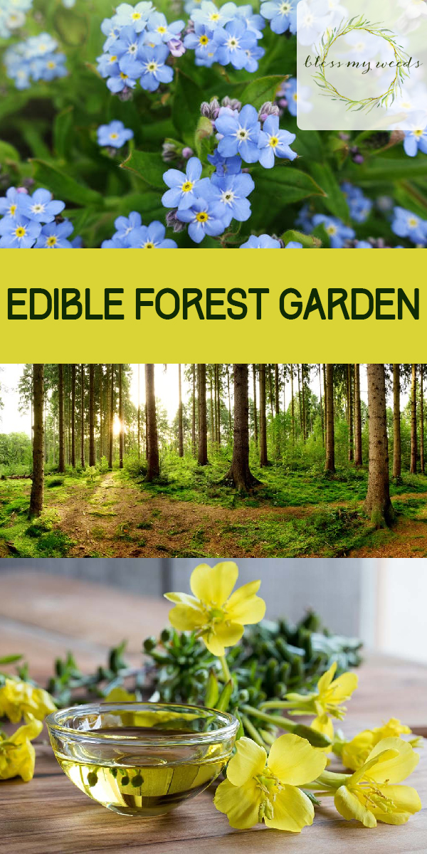 edible forest garden | edible plants | plants | forest | edible | garden