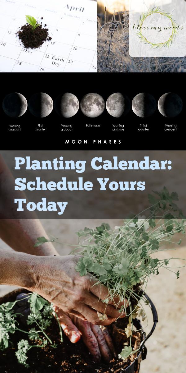 planting calendar | gardening | flower beds | garden beds | harvest