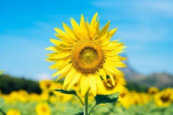 sun loving flowers | flowers | sun | flower | flower bed | sunny | garden