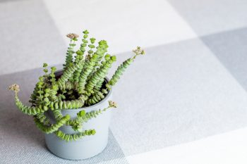 plants with super cool shapes | plants | cool shapes | decor | plant shapes | fun plants