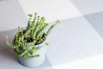 plants with super cool shapes | plants | cool shapes | decor | plant shapes | fun plants