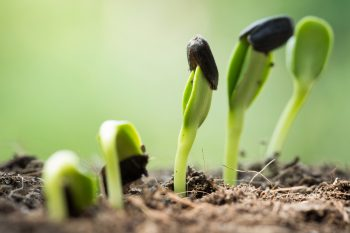 Growing Transplants | Growing Transplants at Home | Tips and Tricks for Growing Transplants | Ideas for Growing Transplants | Tips to Successfully Grow Transplants | Learn How to Grow Transplants