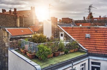 rooftop gardening | rooftop gardening tips | rooftop garden | garden | rooftop | gardening | tips and tricks | gardening tips