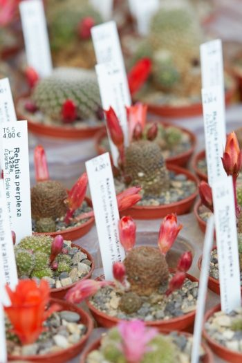 plant tags | plants | gardening | gardening tips | plant tips | gardenners | tags | flowers | flower tips | flower tags | trees | tree tags