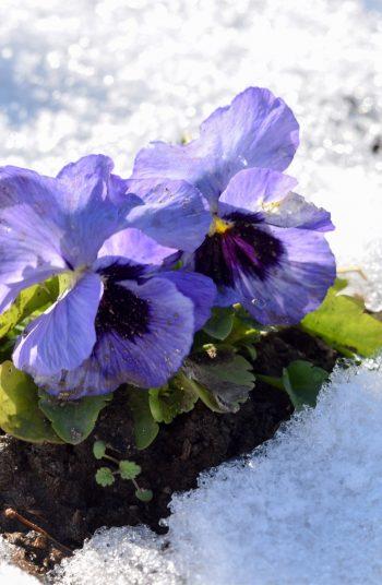 february gardening tips | february | gardening | garden | gardening tips | garden tips | tips and tricks | february gardening | winter gardening | winter