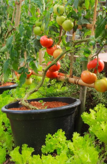 container gardening   soil essentials   soil essentials for container gardening   soil   gardening   garden   container