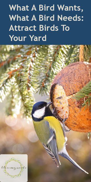 bird watching | birds | how to attract birds to your yard | attract birds to your yard | bird | bird feeder | bird bath | bird food | bird shelter