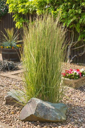 drought | gardening tips | gardening tips for drought conditions | drought conditions | gardening | gardening in drought conditions