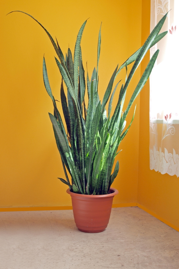 houseplants | low light houseplants | low light | indoor plants | plants | trees | indoor trees