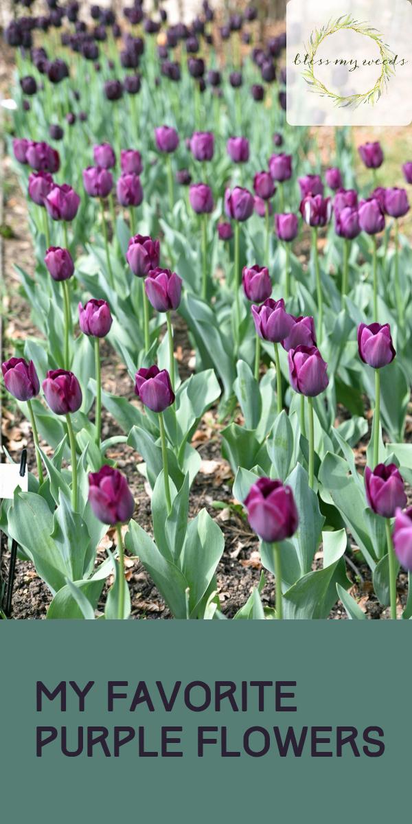 purple flowers | favorite flowers | flowers | garden | gardening | flower bed | yard | purple