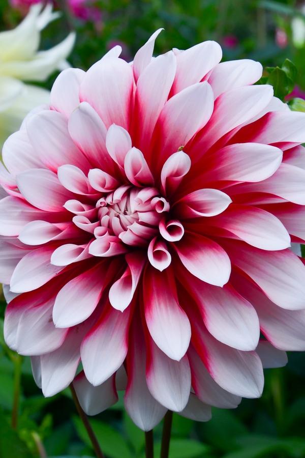 summer flowers | summer | flowers | garden | garden ideas | flower ideas | summer flower ideas