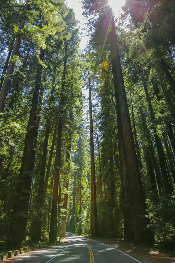 Plants Of Northern California | indigenous inspiration | plants | California | indigenous plants of California | flowers | native plants of California