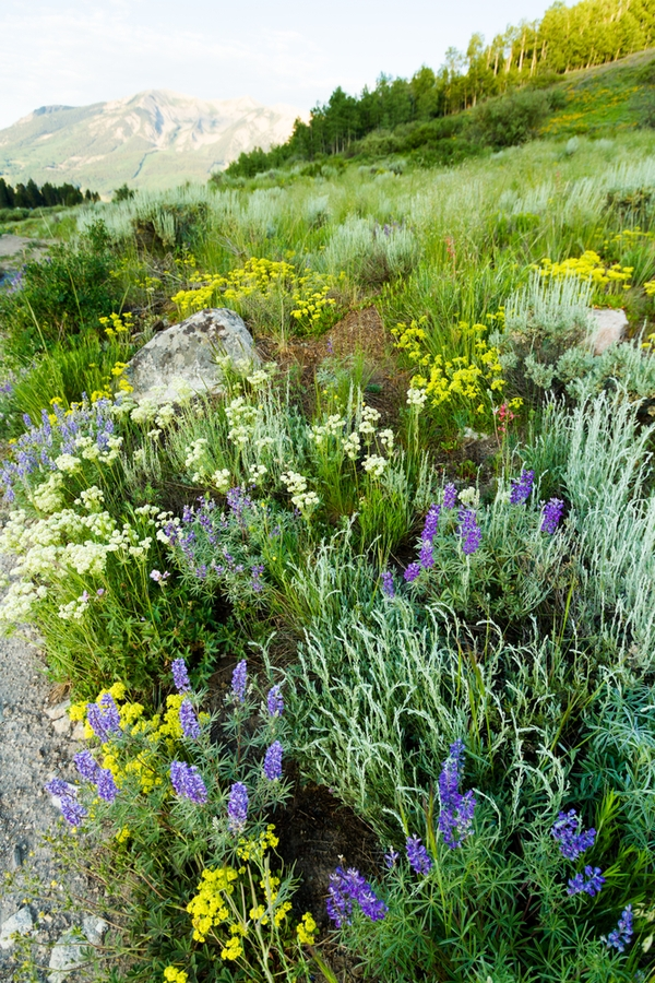 plants of the mountain west   indigenous inspiration   indigenous plants of the mountain west   mountain west   mountains   mountain west plants   plants   mountain plants