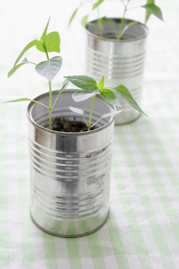 container gardening for beginners   container gardening   container gardening ideas   container gardening in cans   gardening   gardening for beginners   gardens