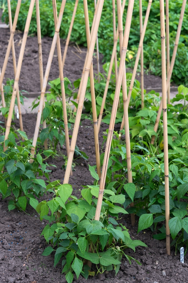 pint-sized produce | small gardening | dwarf vegetable plants | vegetables | produce | fruit | gardens | small gardens | gardening