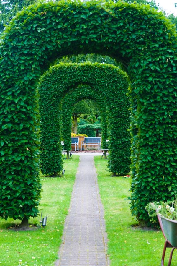 hedge training tips | hedges | landscape | landscape tips | hedging tips | hedging ideas | landscape ideas | garden | yard | backyard ideas