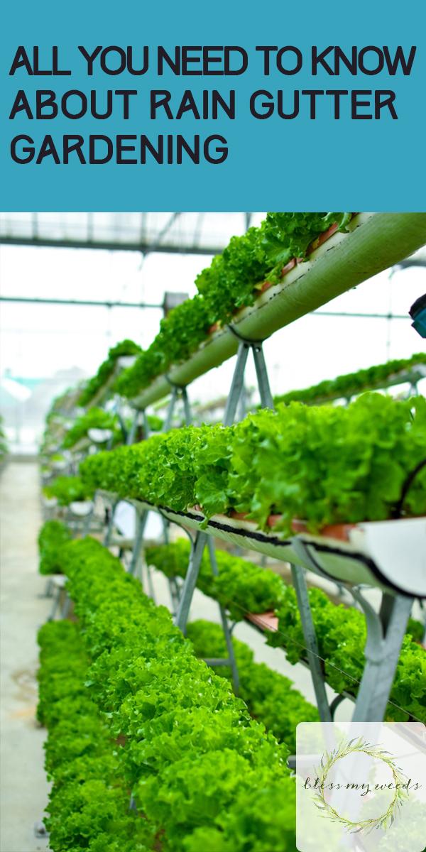 Rain Gutter Gardening | container gardening | garden | rain gutter | gardening | garden ideas | vertical gardening