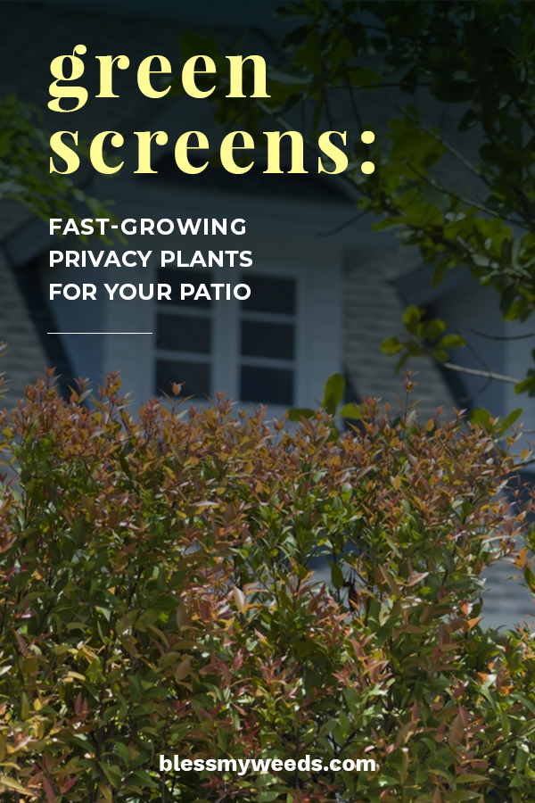 Green Screens Fast Growing Privacy Plants For Your Patio Bless