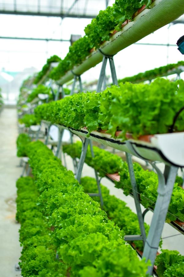 Rain Gutter Gardening