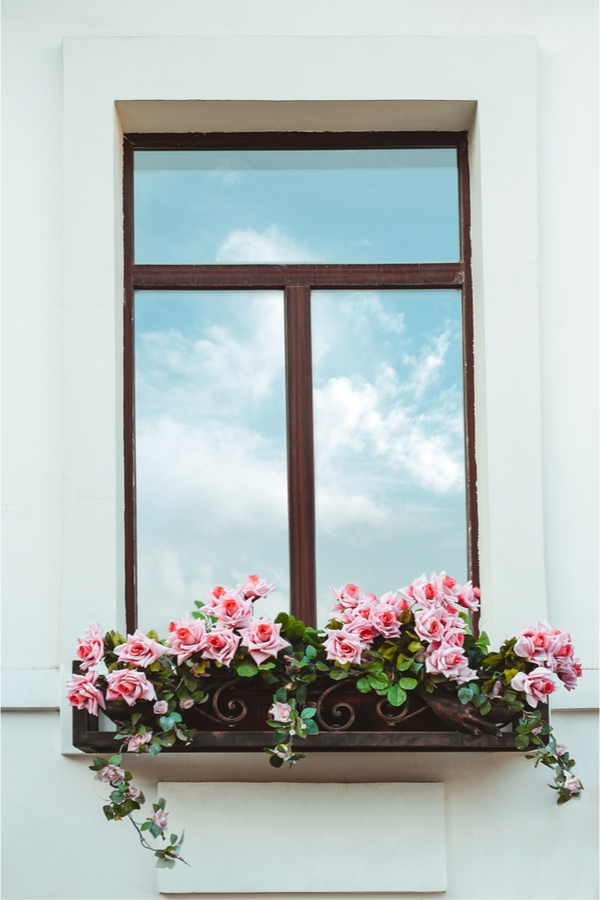 trailing plants for window boxes   flowers   window boxes   flowers for window boxes   hanging flowers   trialing plants   trailing flowers