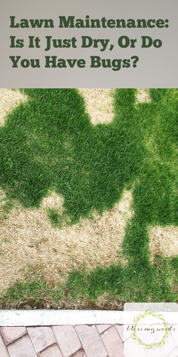 Lawn Maintenance   landscape   lawn bugs   pest control   tips and tricks   lawn care   lawn   grass   bugs
