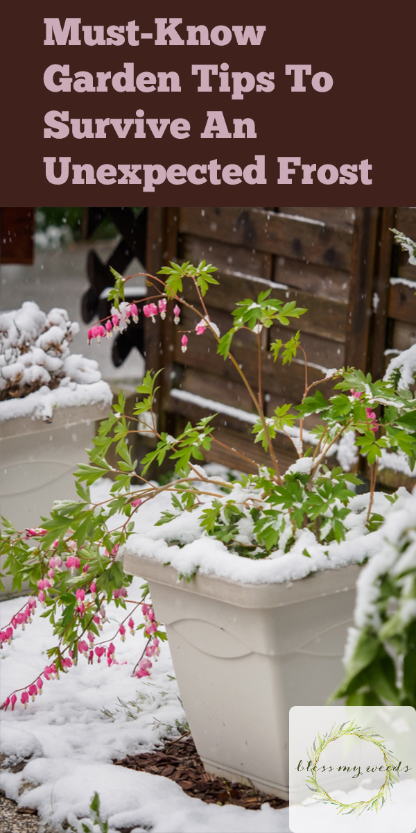 Tips To Survive an Unexpected Frost | garden | tips and tricks | unexpected frost | frost | gardening tips | unexpected frost tips | gardening