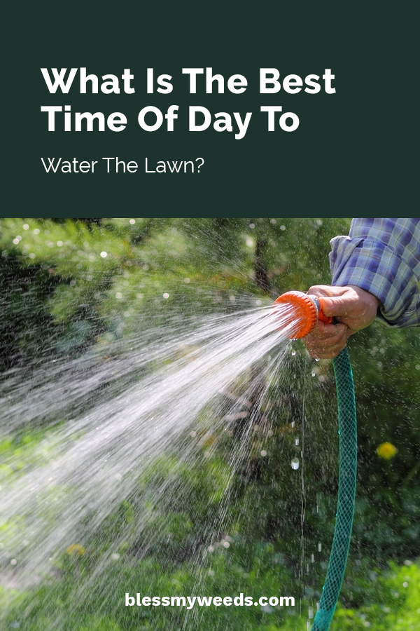 What Is The Best Time Of Day To Water Lawn Bless My Weeds