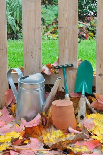 Fall Gardening Cheat Sheet | fall | fall gardening | gardening | tips and tricks | gardening tips