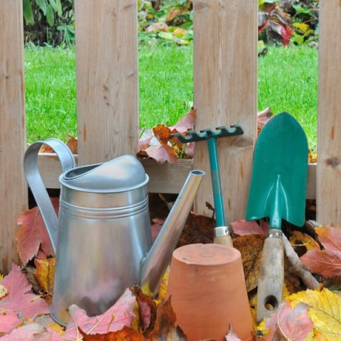 Fall Gardening Playbook