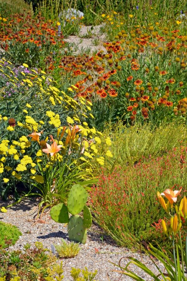 low-water gardening ideas | xeriscape | garden | garden ideas | xeriscape garden | xeriscape garden ideas | xeriscaping